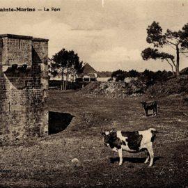 FortdeSainteMarine-Vaches
