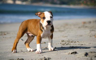 puppy-345334_1920