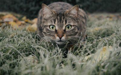 cat-5778777_1920