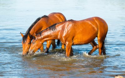 two-horses-5352955_1920
